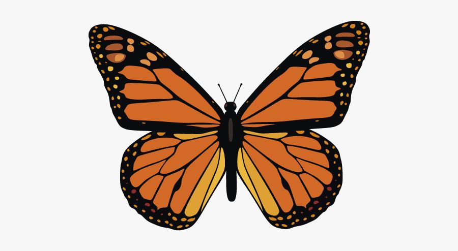 Mariposa Monarca Para Dibujar, Transparent Clipart