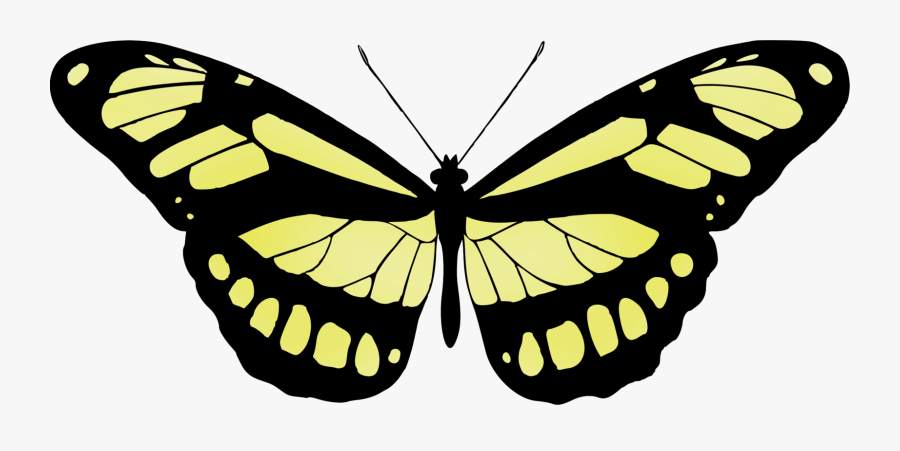 Butterfly,monochrome Photography,symmetry - Butterfly Printmaking, Transparent Clipart