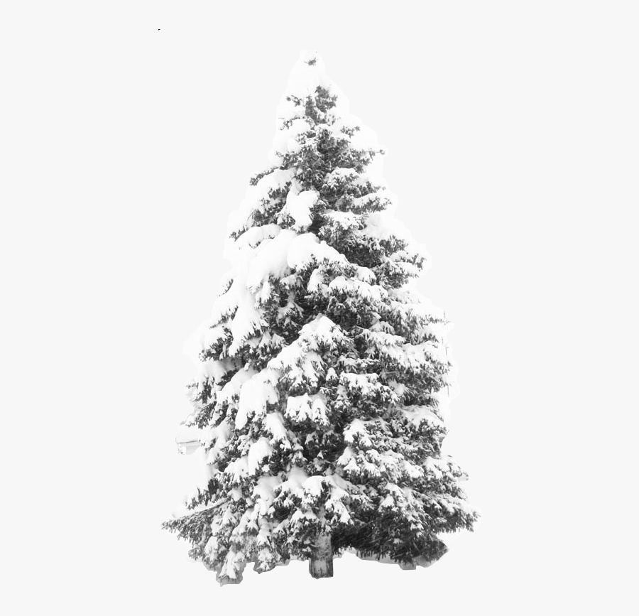 Transparent Snowy Trees Clipart - Tree With Snow Transparent Background, Transparent Clipart
