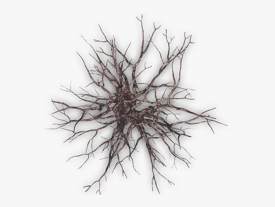 Winter Tree Png Plan - Winter Tree Top View Png, Transparent Clipart