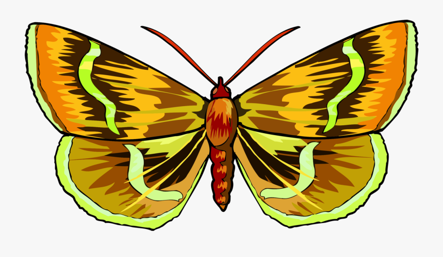 Butterfly,symmetry,moth - Brush-footed Butterfly, Transparent Clipart