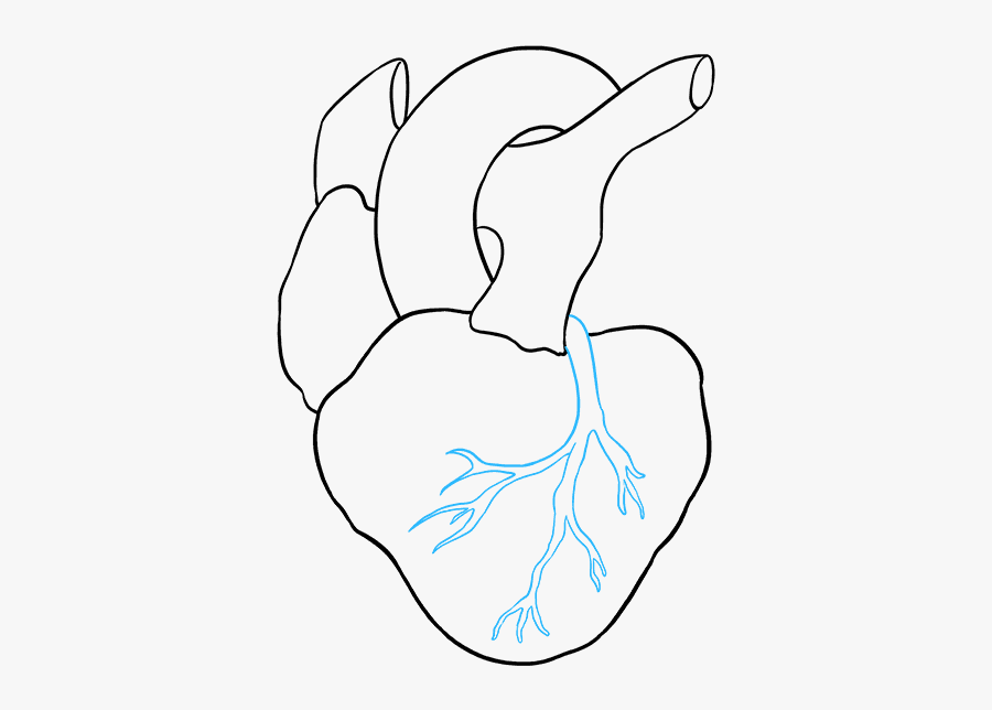 Clip Art How To Draw A - Real Heart Simple Drawing, Transparent Clipart