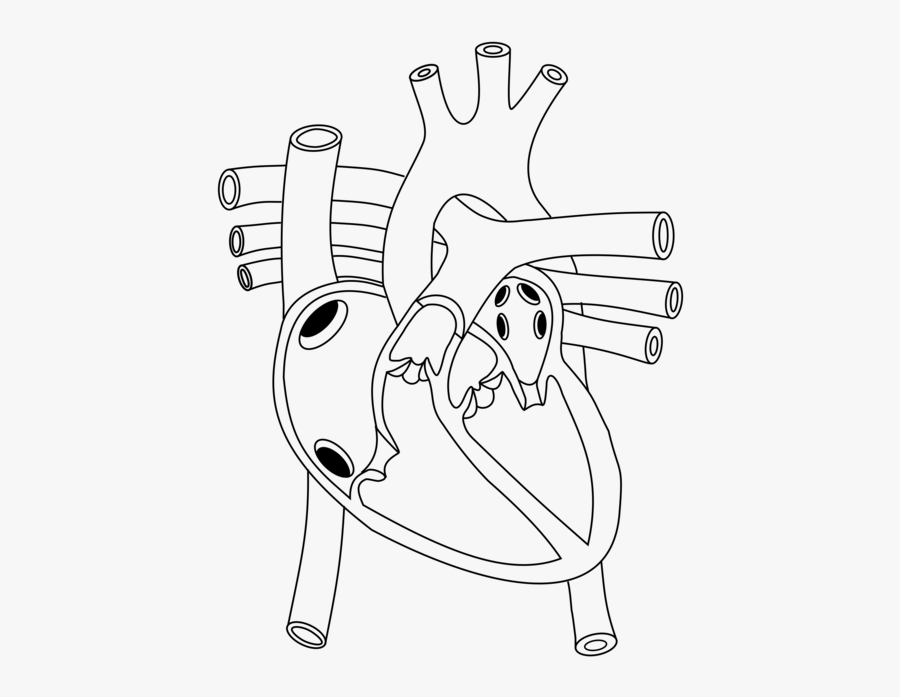 Shoe,line Art,angle - Diagram Of Heart In Human Body, Transparent Clipart