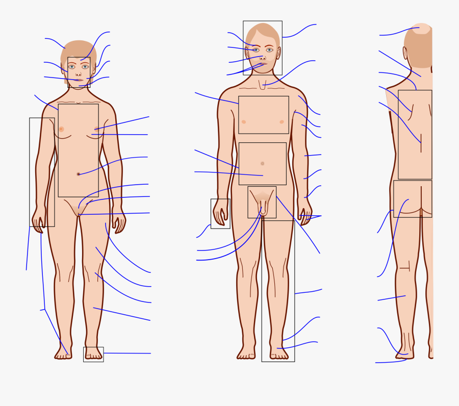 Clip Art File Features With Labels - Human Body With Blank Labels, Transparent Clipart