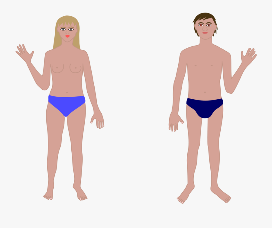 Human Body, Man And Woman Clipart, Vector Clip Art - Human Body Parts Without Names, Transparent Clipart
