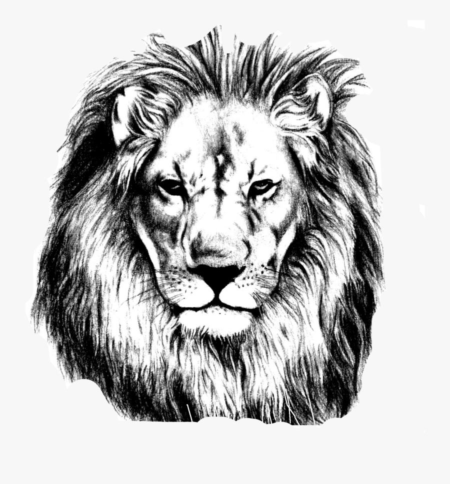 Sketch Lions Head Transprent Png - Realistic Lion Face Drawing, Transparent Clipart
