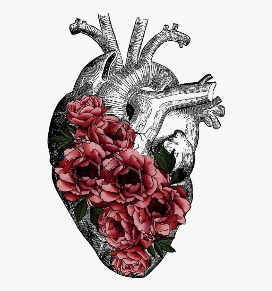 #heart #flowers #drawing #humanheart #freetoedit - Art Human Heart Png, Transparent Clipart