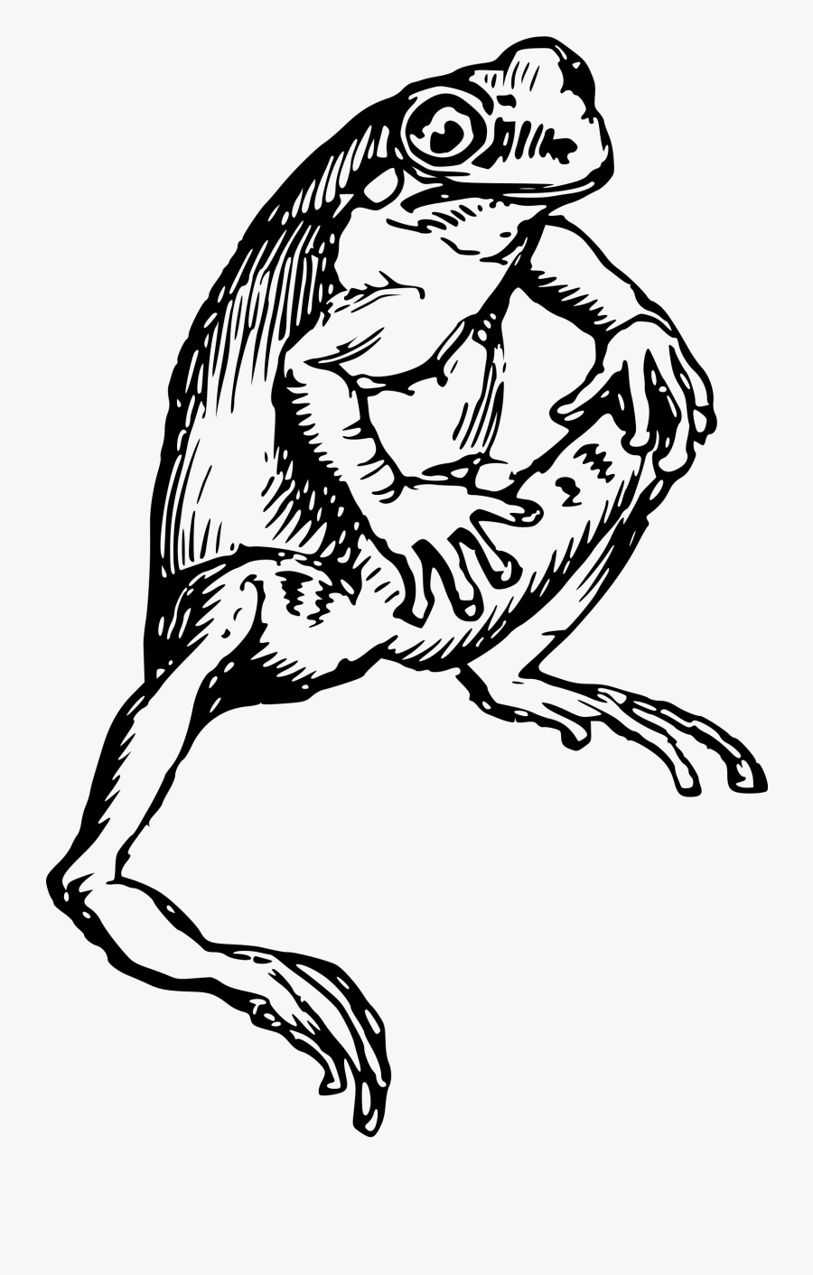Black And White Bclipart - Drawing Of Frog Black And White, Transparent Clipart