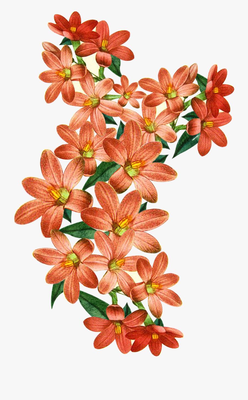 Vector,flower,vector Art,flower Vector,vector Flower - Floral Textile Design, Transparent Clipart