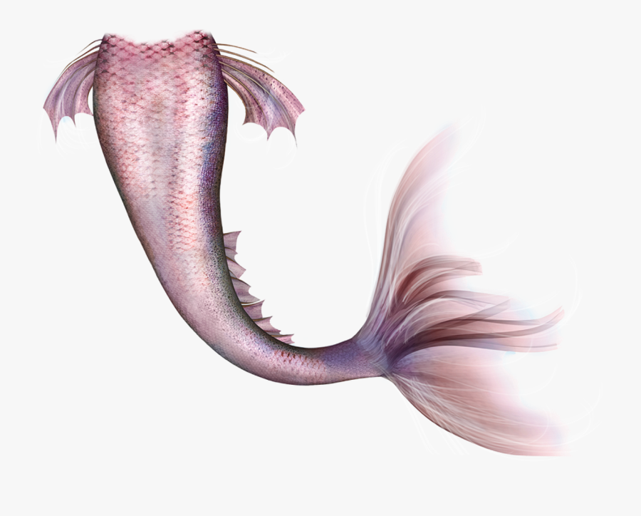 Mermaid Legendary Creature Fairy Tail - Mermaid Tail Png Free, Transparent Clipart