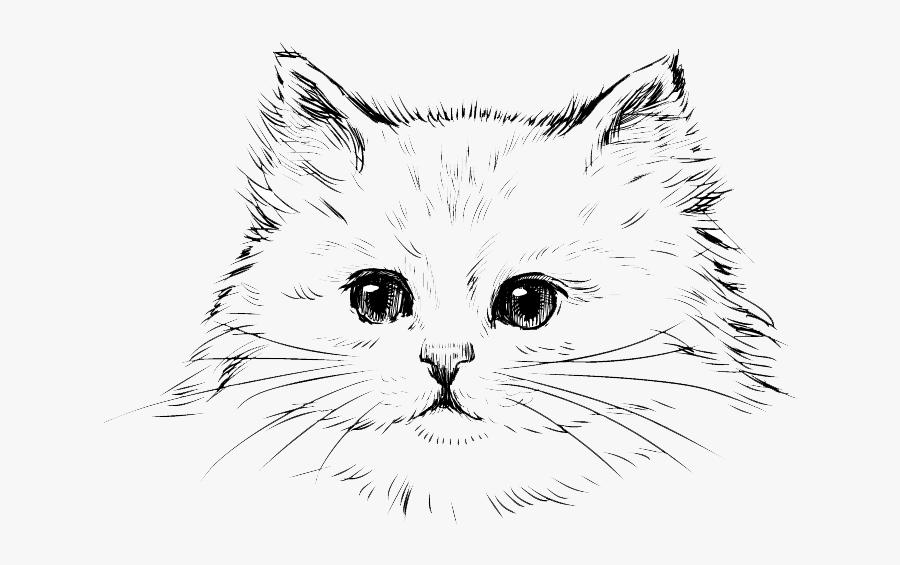 Persian Cat Kitten Drawing Black Cat - Draw A Persian Cat, Transparent Clipart