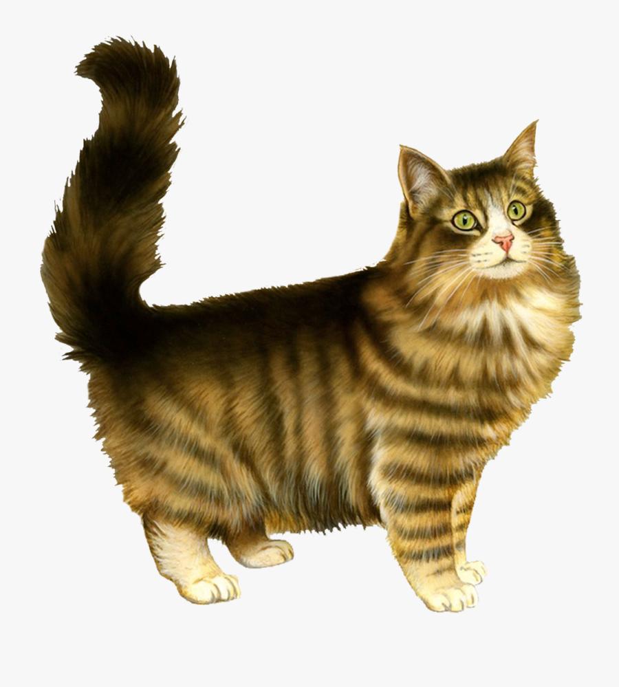 Kitten Russian Blue Persian Cat Clip Art - Valentines Day Meme Cards Cats, Transparent Clipart
