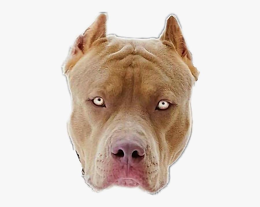 #pitbull - Pitbull Dog, Transparent Clipart
