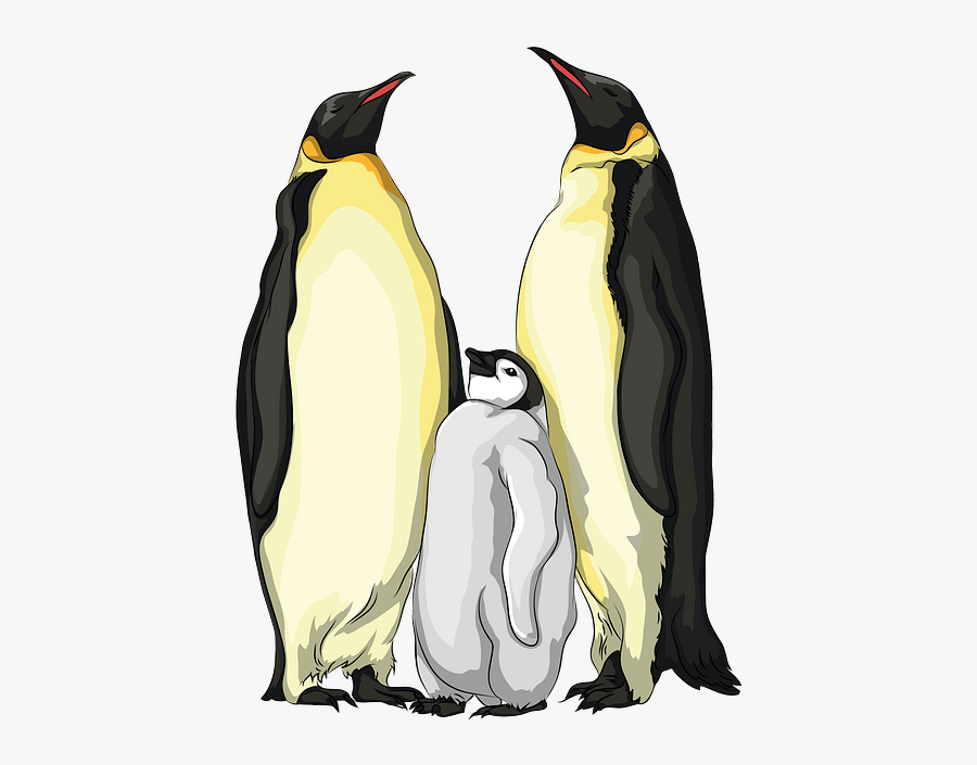 Emperor Penguin, Transparent Clipart