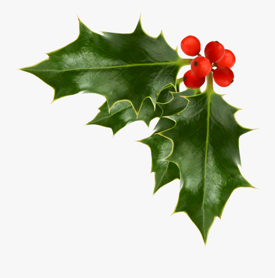 Christmas Holly Picture - Corner Holly Transparent Background, Transparent Clipart