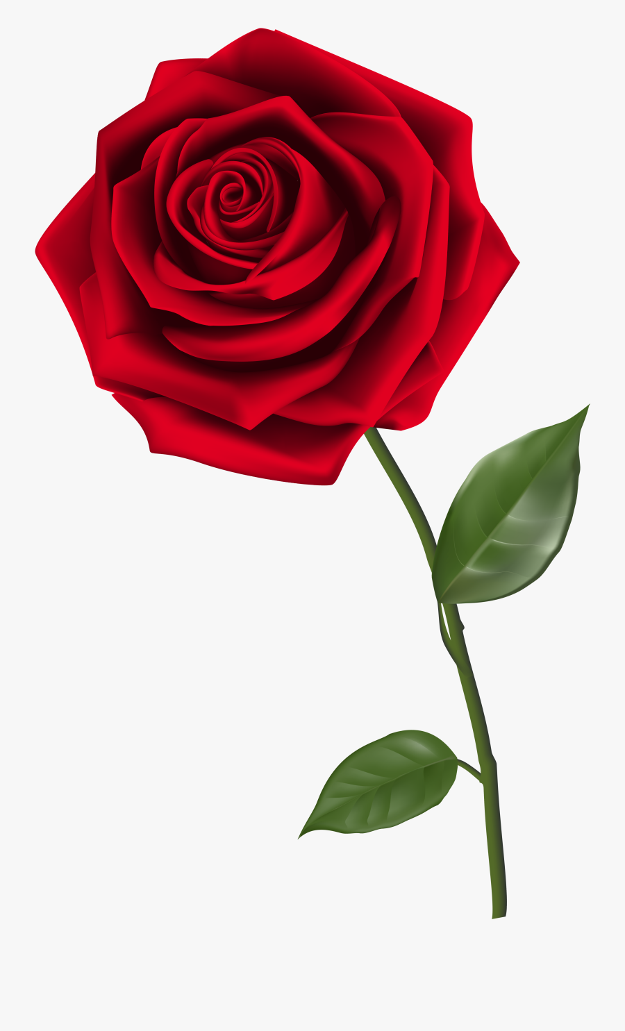 Clipart Roses Clear Background - Red Rose Clear Background, Transparent Clipart