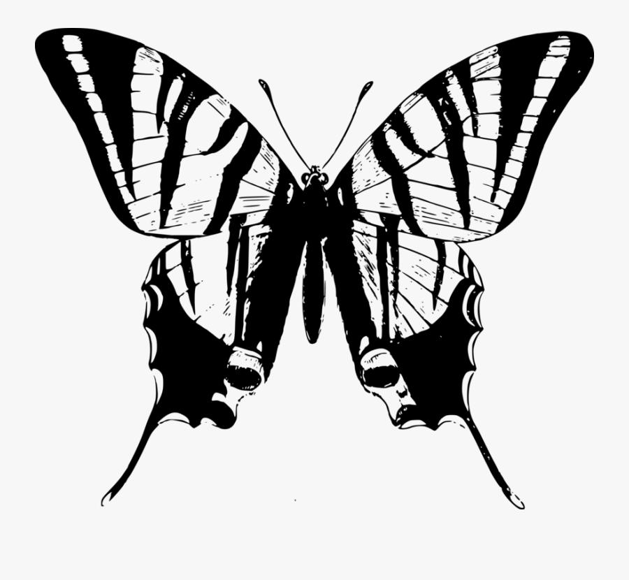 Photography - Butterfly Talk Caterpillar, Transparent Clipart