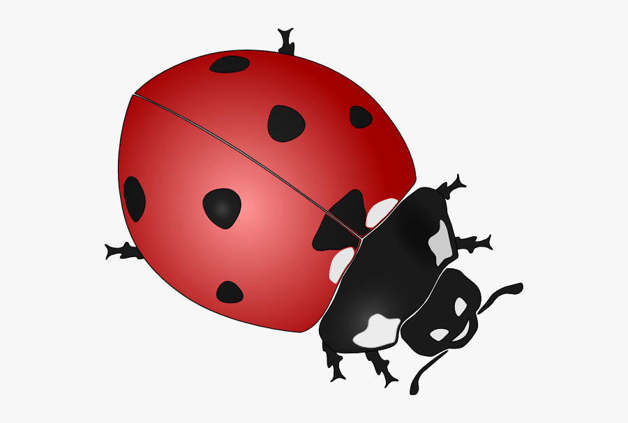 Ladybug Cartoon Image - Black And White Ladybug Vector, Transparent Clipart