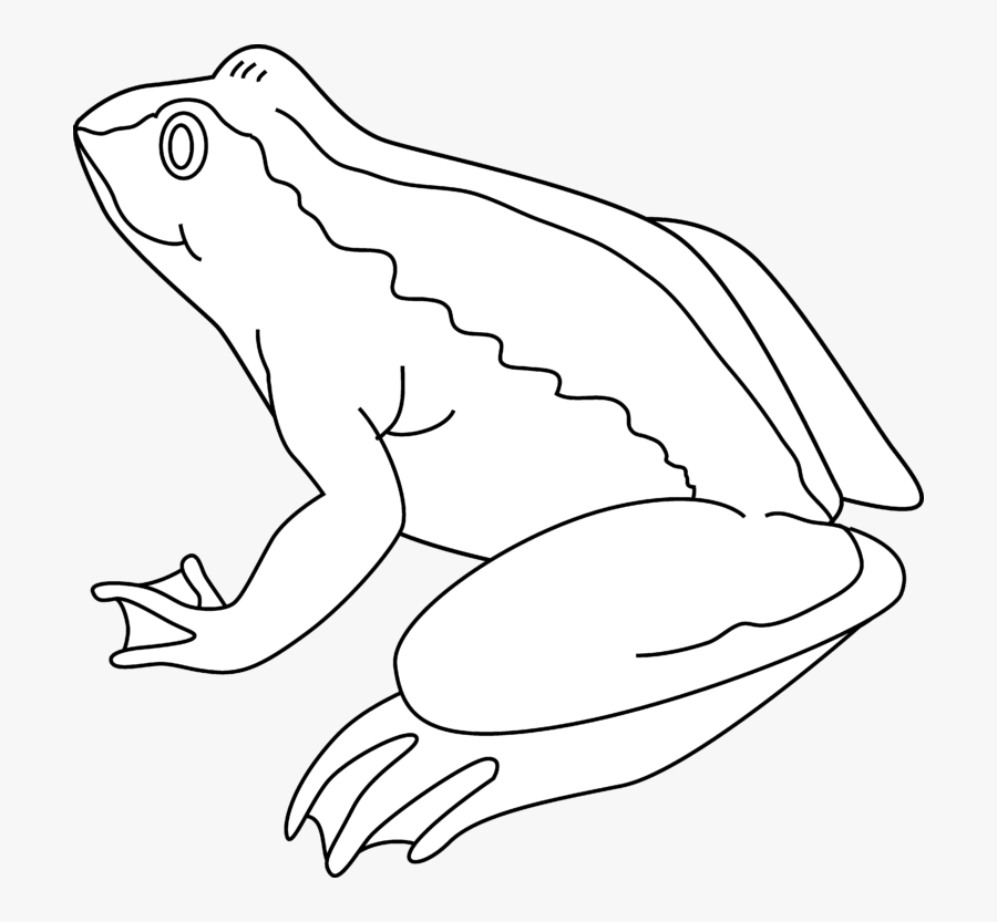 Frog Black And White Frog Clipart Black And White - Frog Outline Black And White Clipart, Transparent Clipart