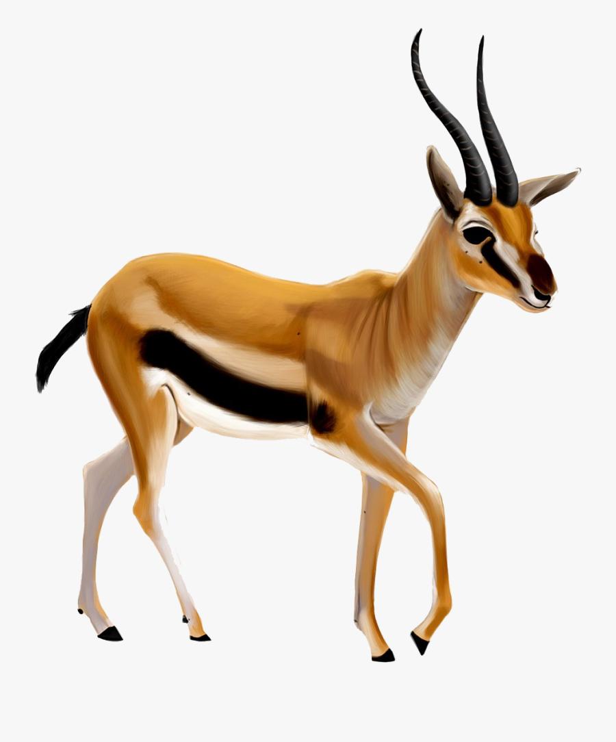 Antelope Png Images - Gazelle Clipart Png, Transparent Clipart