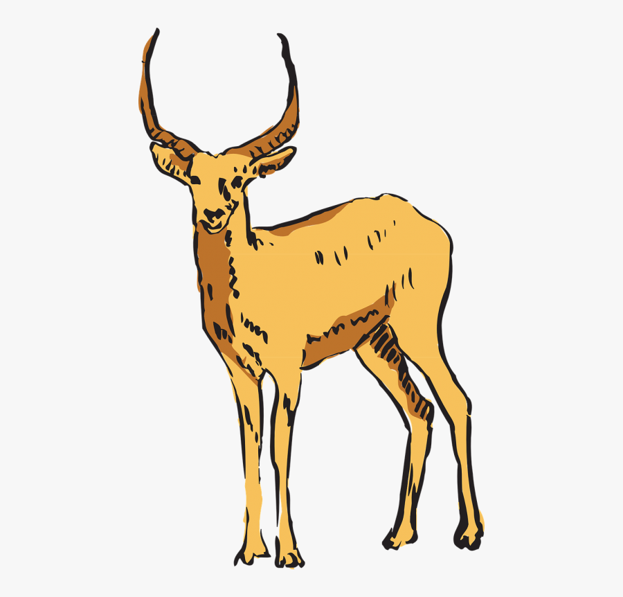 Antelope Forest Standing - Antelope, Transparent Clipart