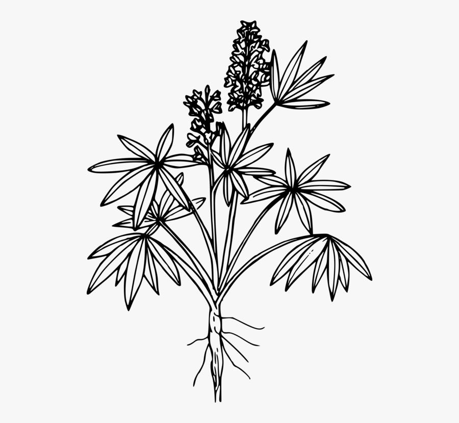Botany,plant,flower - Coloring Page, Transparent Clipart