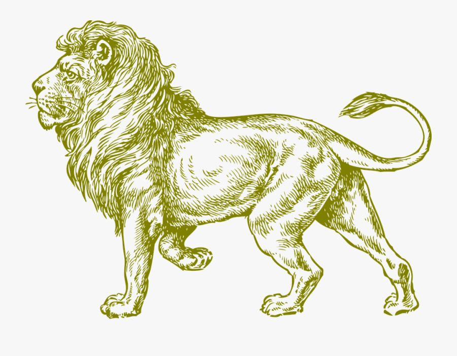 Realistic Lion Coloring Pages For Adults, Transparent Clipart