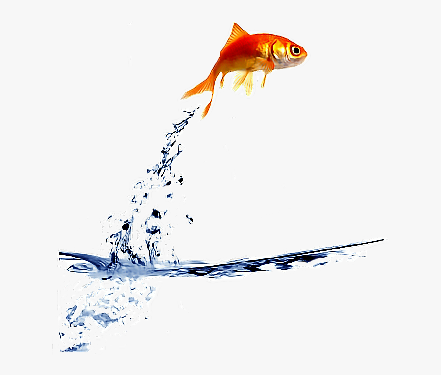 Transparent Goldfish Clipart - Fish Jumping Out Of Water Png, Transparent Clipart