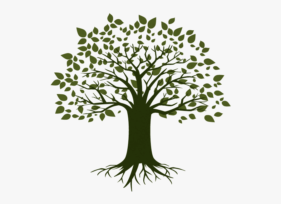 Tree Picture For Student, Transparent Clipart