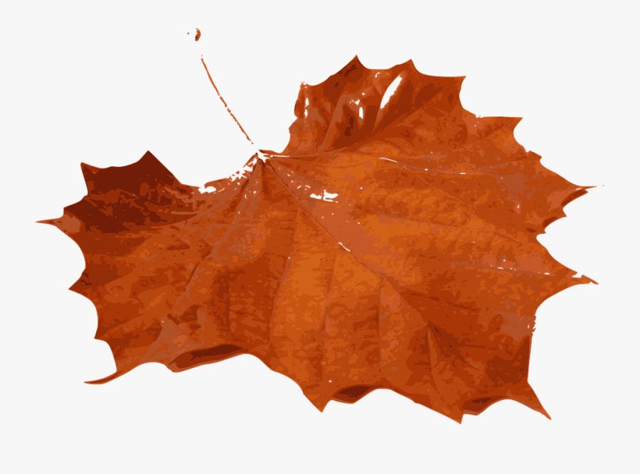 Orange Maple Leaves Png, Transparent Clipart