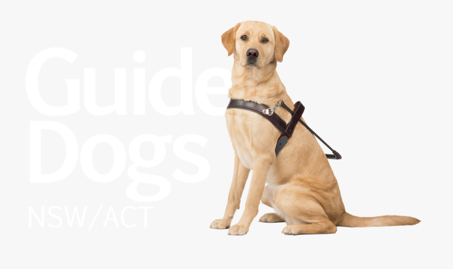 Guide Dogs Victoria Puppy The Guide Dogs For The Blind - Guide Dogs Australia Logo, Transparent Clipart