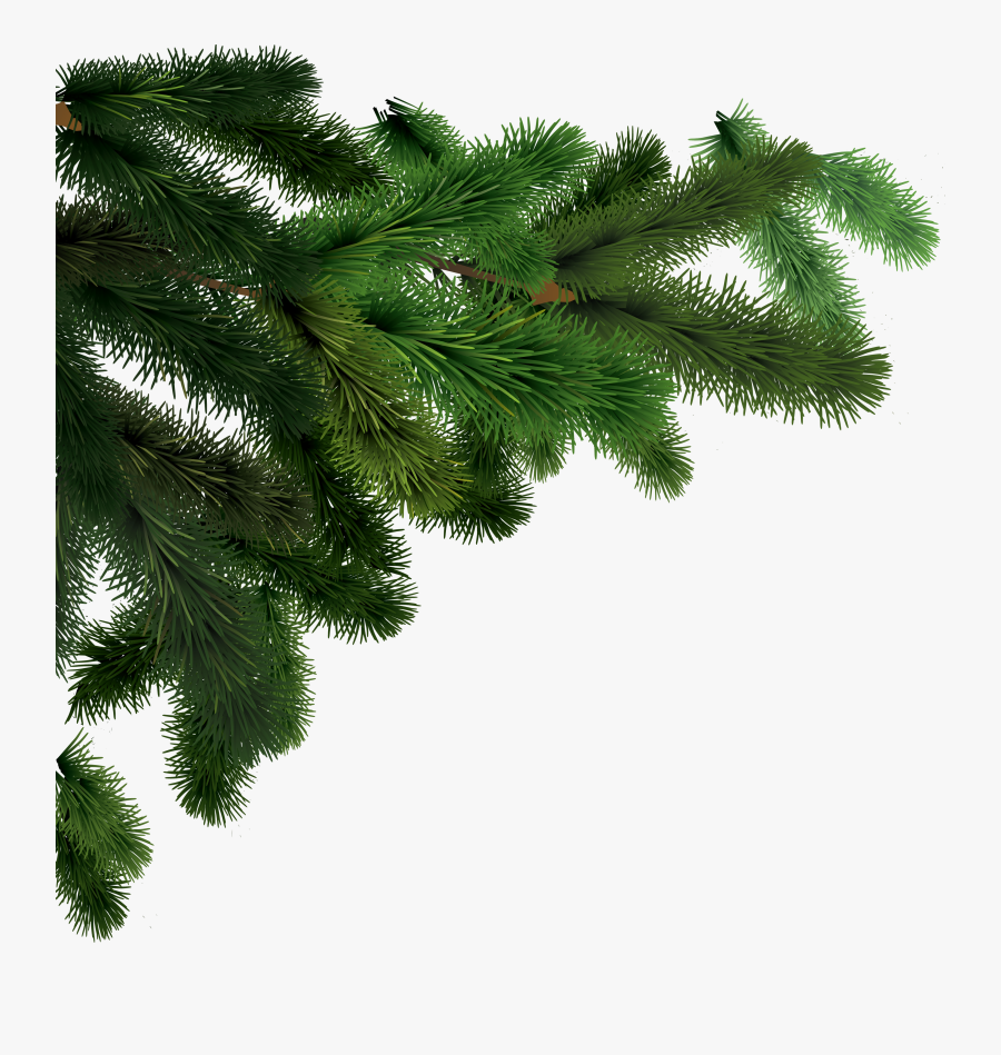 Tree Branch Png - Pine Tree Branch Png, Transparent Clipart