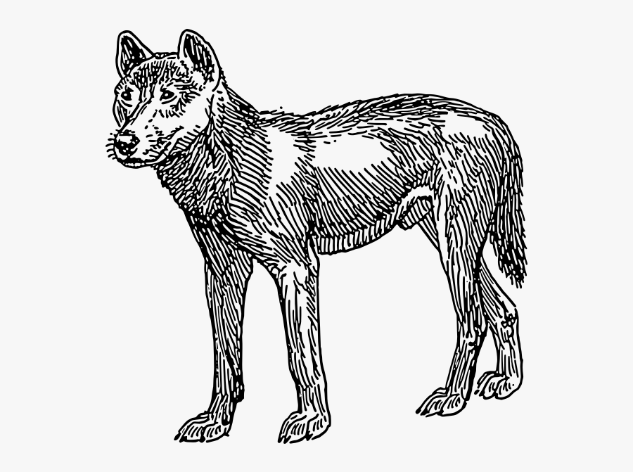 Dingo Vector Image - First Dogs Looked Like, Transparent Clipart