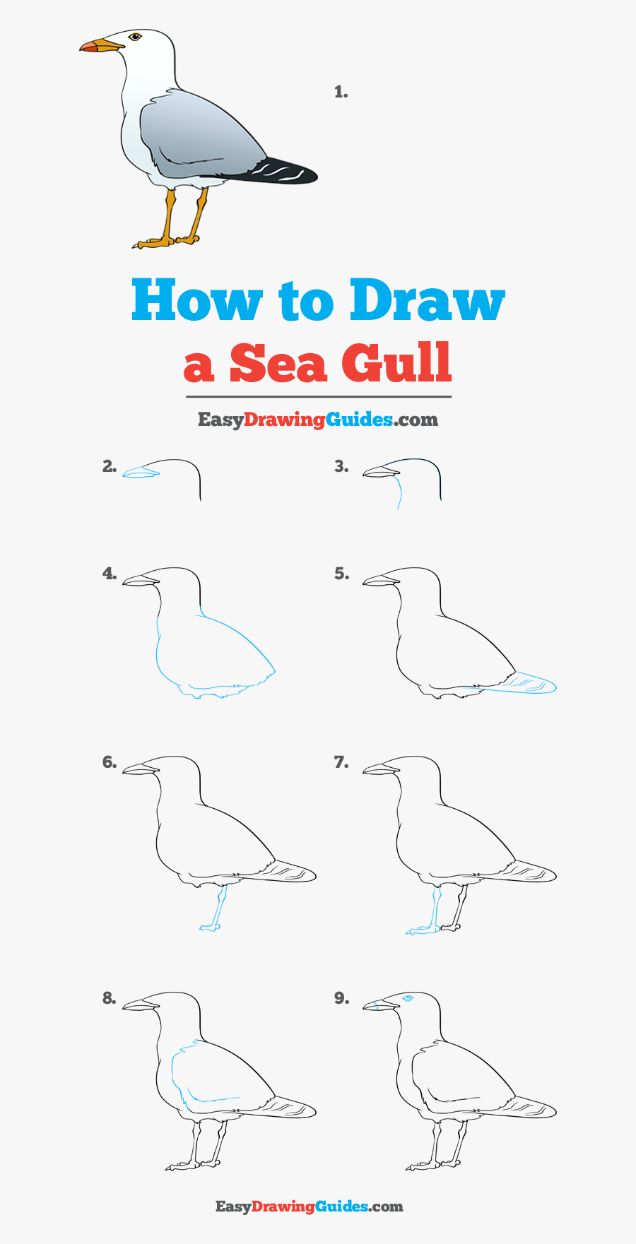 How To Draw Seagull - Easy Step How To Draw A Seagull, Transparent Clipart