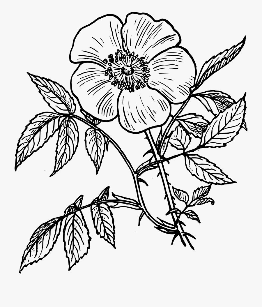 Flower Line Art Png, Transparent Clipart