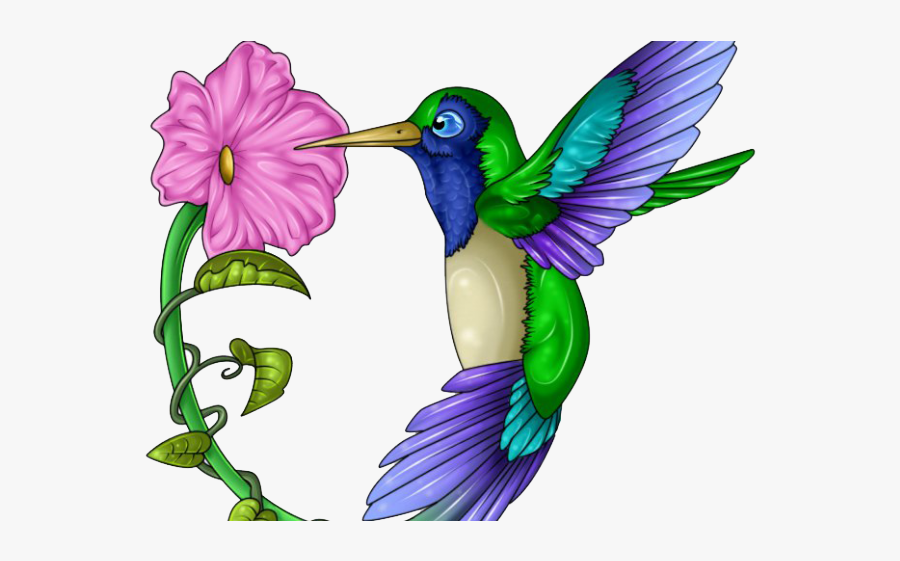 Color Hummingbirds And Flowers Drawings, Transparent Clipart