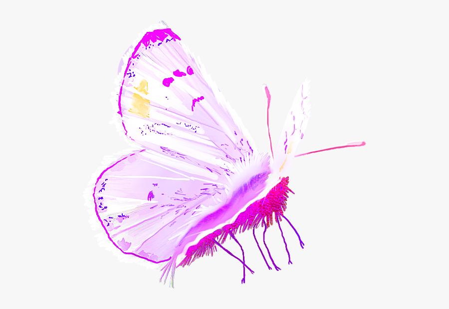 Pieridae, Transparent Clipart