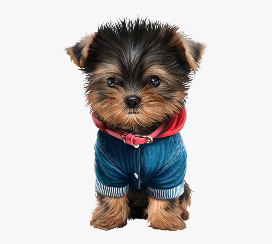 Featured image of post Yorkie Puppy Transparent Background