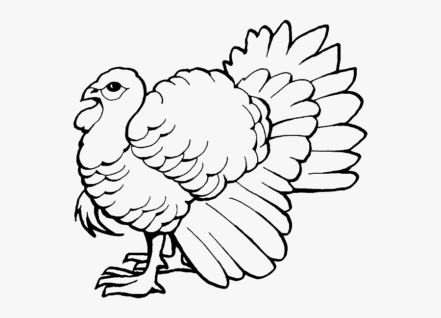 Coloring Pages Of Turkey, Transparent Clipart