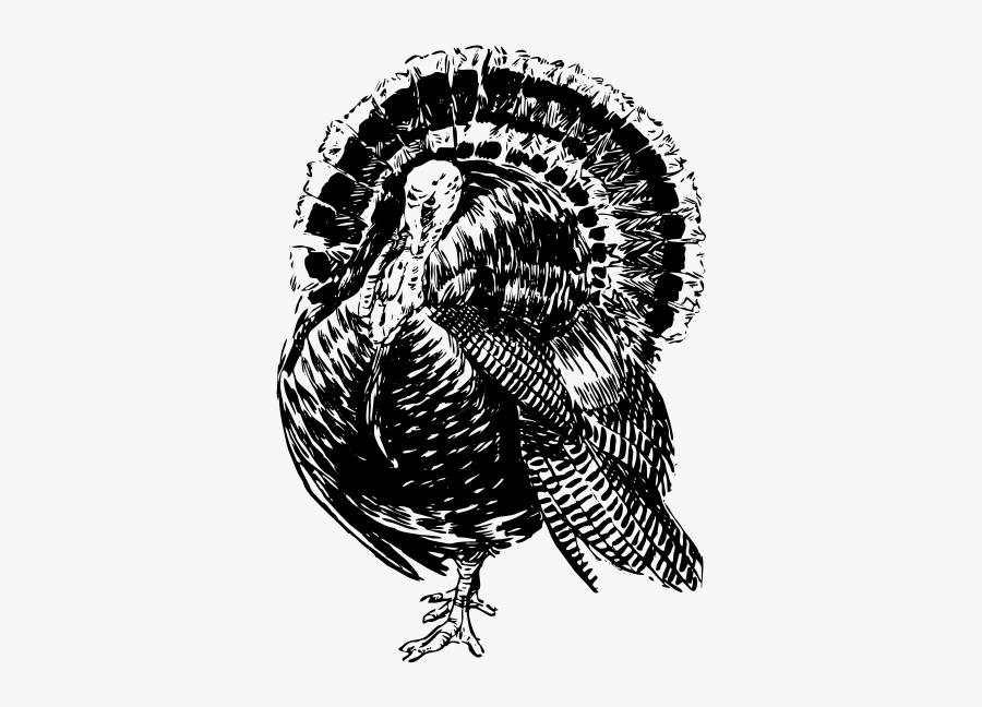 Turkey - Line Art Turkey, Transparent Clipart