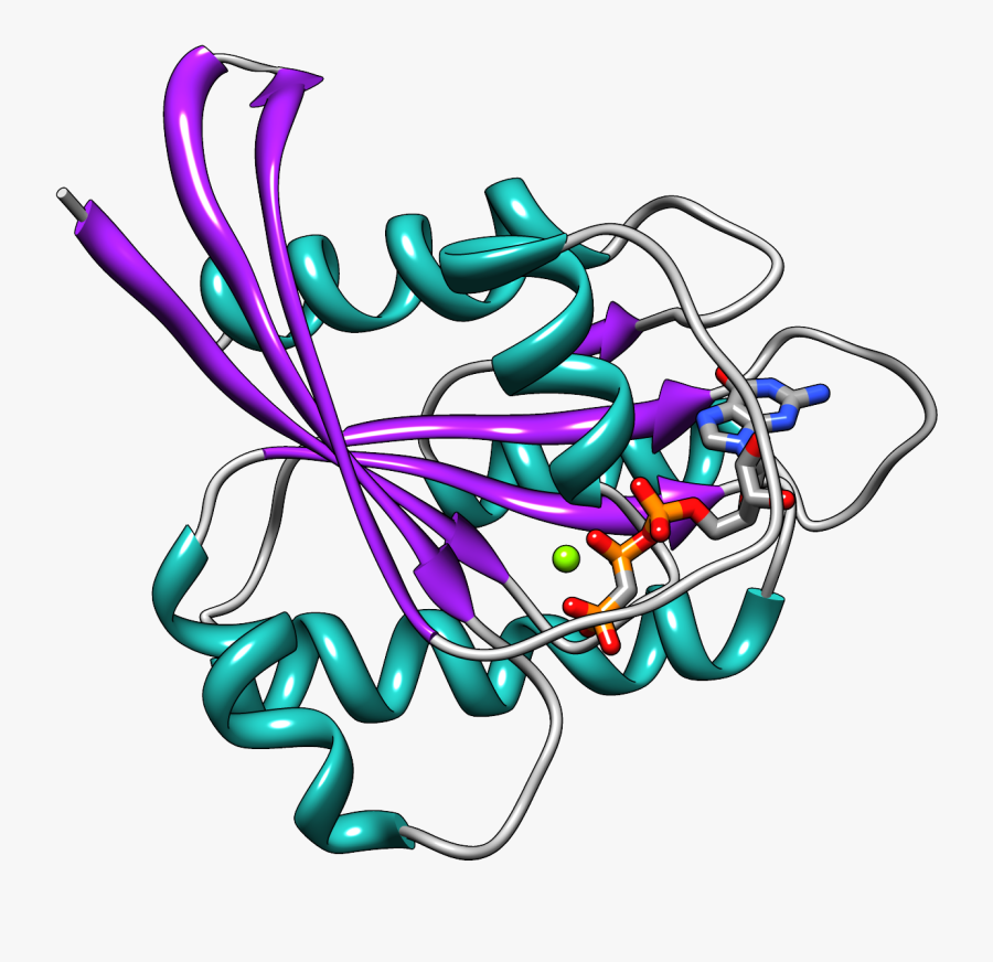 New Therapeutic Target For Cancer - Ras Gtpase, Transparent Clipart