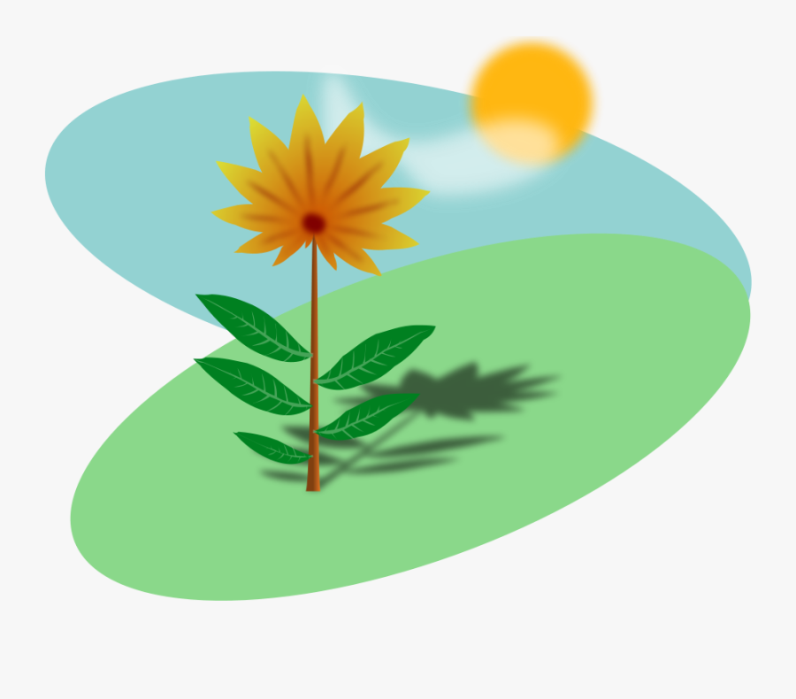 Sunny Field With A Flower - Sun And Flower Cartoon, Transparent Clipart