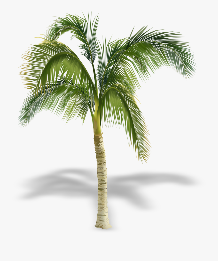 Transparent Palm Tree Free Clipart - Palm Trees In Elevation, Transparent Clipart