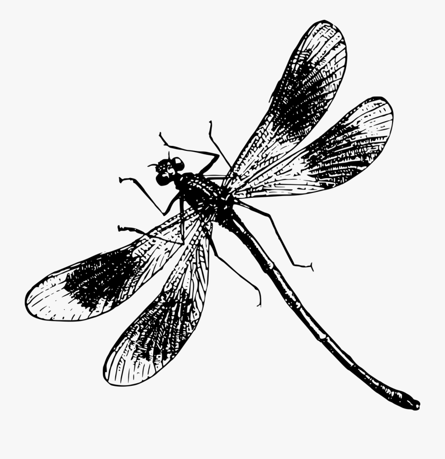Butterfly Illustration Transprent - Black And White Dragonfly Png, Transparent Clipart