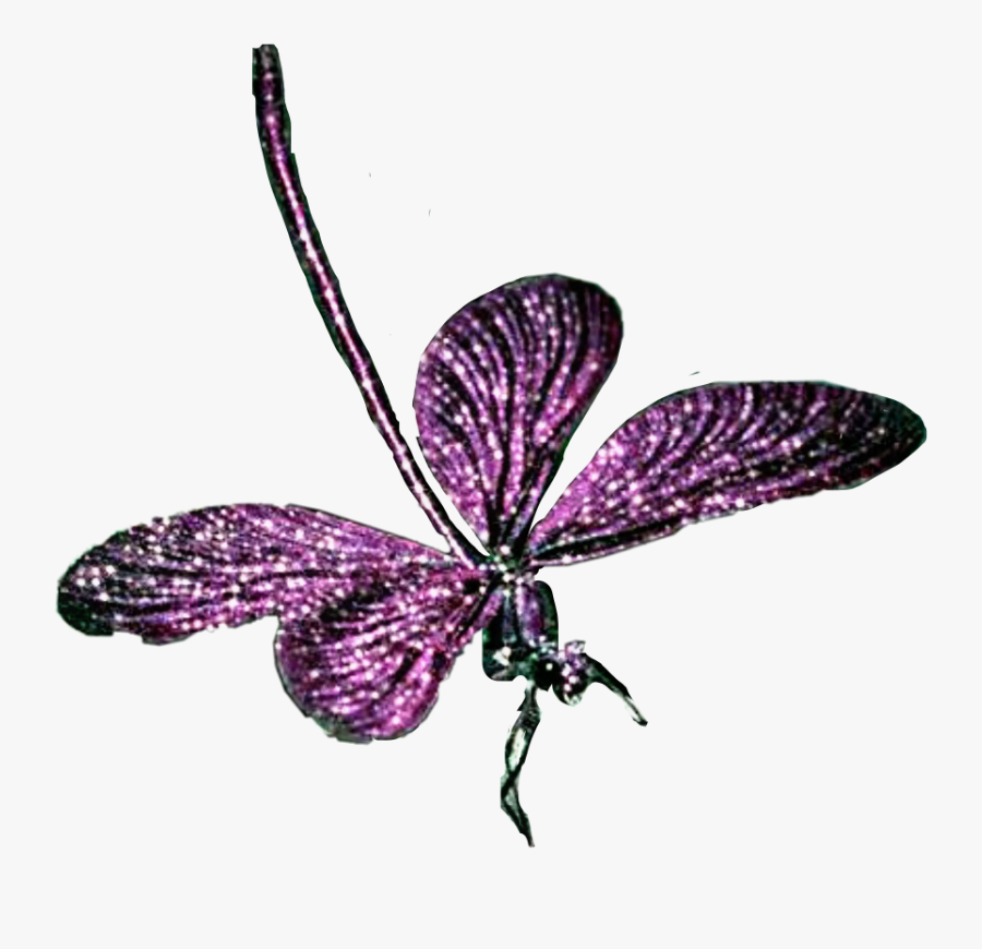 Transparent Purple Dragonfly Clipart - Brush-footed Butterfly, Transparent Clipart