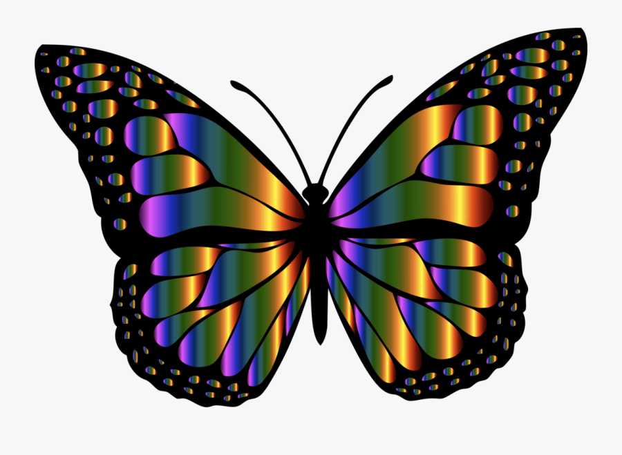 Butterfly,cynthia Subgenus,symmetry - Rainbow Butterfly Clipart, Transparent Clipart