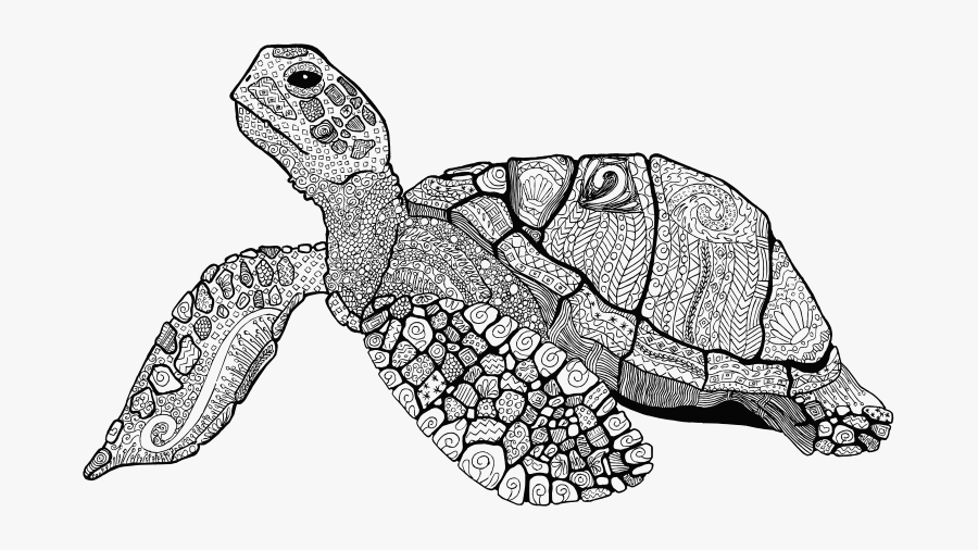 - Floral Sea Turtle Line Art - Hard Turtle Coloring Pages , Free Transparent  Clipart - ClipartKey