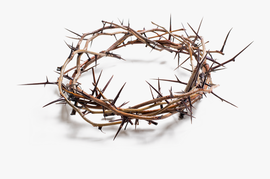 Stock Photography Crown Of Thorns Royalty-free, Transparent Clipart