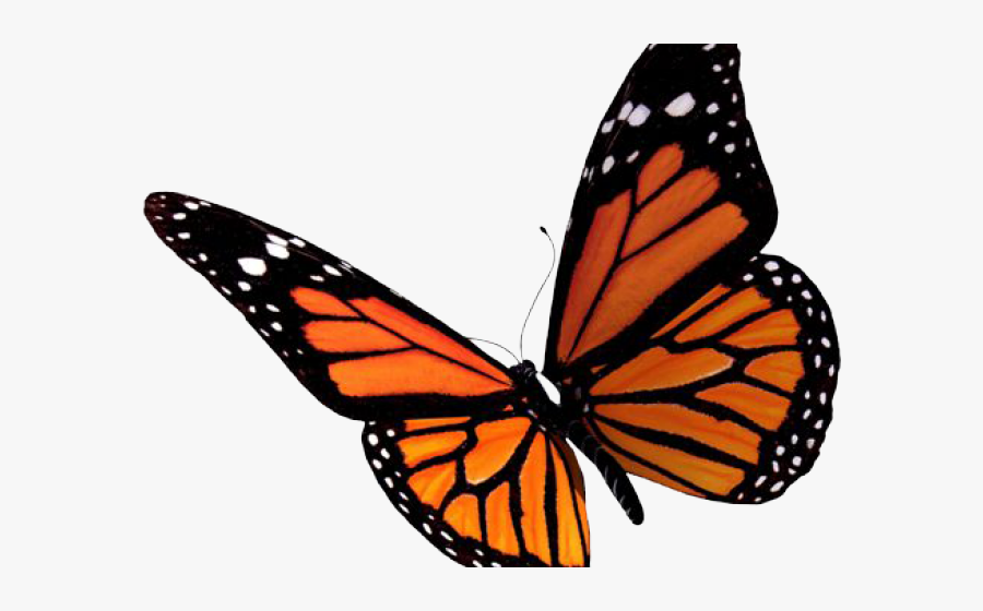 Image Transparent Butterfly Free On Dumielauxepices - Transparent Orange Butterfly Png, Transparent Clipart