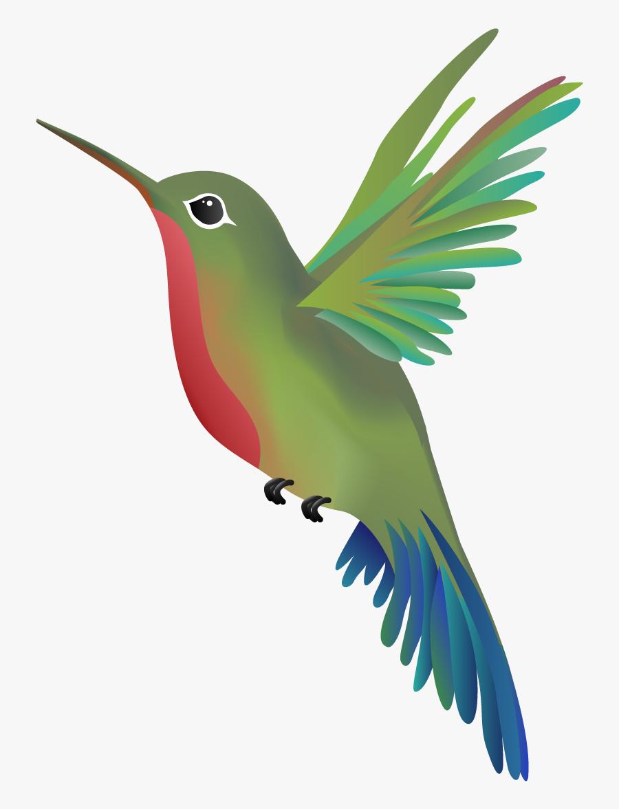 Hummingbird Png - Wandering Hummingbird Massage, Transparent Clipart